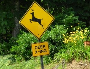 Deer Crossing Caution