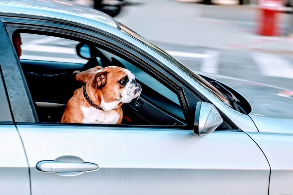 Driving Safety Tips for Pet Owners